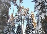 В «Кологривском лесу» протестовали 70 сотрудников заповедника