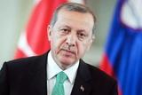 Турция определилась с планом действий в Идлибе