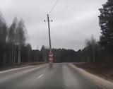 """Во Владимирской области чиновника уволили за """"перебегающие"""" дорогу столбы"""