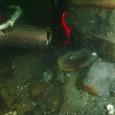 Археологи обнаружили останки самого известного корабля Джеймса Кука «Индевор»
