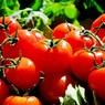 Россия запретит ввоз томатов и яблок из Азербайджана