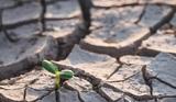 Климатологи предупредили об усилении летней жары в течение следующих трех лет