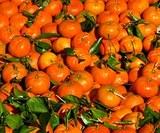 Турецкие мандарины и апельсины возвращаются в Россию