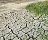 ООН: 2019 год стал одним из самых жарких в истории