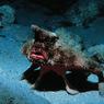 Рыбаки нашли у побережья Тасмании двуполого монстра