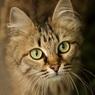 После чудесного спасения хозяйка хочет присвоить своему коту Алексею еще и отчество