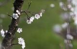 """Тишковец удивил термином """"фенологическая весна"""", а Сочи невероятным теплом"""