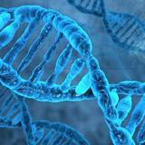 Генетики нашли объяснение слабой воле курильщиков в борьбе с привычкой