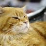 Кошка Матроскина, объевшая рыбный магазин, станет блогером