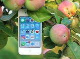 Компания Apple представила обновленную версию iPhone 7 Plus в красном корпусе
