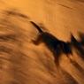 Стаи диких собак в пригороде Улан-Удэ уничтожают лесных животных