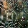 Кто осмелится заглянуть в глаза пауку? (ФОТО)