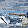 Скелет кита из «Левиафана» выкупил российский бизнесмен