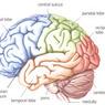 Ученые  создали наночастицы для лечения опухолей мозга