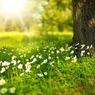Синоптики назвали дату прихода весны