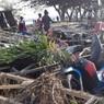 Число жертв цунами в Индонезии достигло 384 человек
