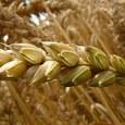Власти Турции  приостановили  беспошлинные поставки зерна  из России