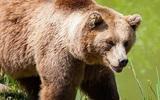 Медведь напал на мужчину в кафе под Иркутском