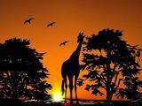 Раскрыт секрет длинной шеи у жирафов