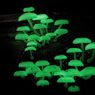 Ученые заставили грибы лучиться всеми цветами радуги