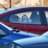На границе России и Финляндии растянулась пробка из сотен машин