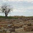 Найденное под Ростовом захоронение оказалось старше египетских пирамид