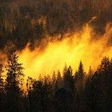 Лесные пожары в Португалии унесли десятки жизней